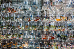 Goldfish market Mong Kok Kowloon Hong Kong Royalty Free Stock Photos