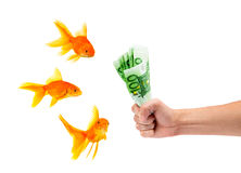 Goldfish with money. On a white background Royalty Free Stock Images