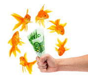 Goldfish with money Royalty Free Stock Photo