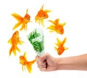 Goldfish with money. On a white background Royalty Free Stock Photo