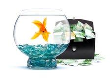 Goldfish with money. Goldfish in aquarium with money on a white background Stock Photos