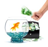 Goldfish with money Royalty Free Stock Images