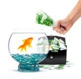 Goldfish with money. Goldfish in aquarium with money on a white background Royalty Free Stock Images