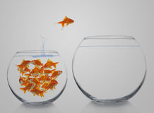 Goldfish moving Stock Photos