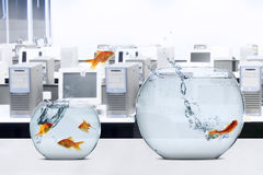 Goldfish moving to larger fishbowl. Picture of goldfish moving to larger fishbowl on the table, shot in office stock photo
