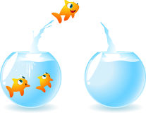 Goldfish in need of space. Little fish jumping from a fish-bowl to another fish-bowl, leaving in the first one two fish friends. Vector illustration Stock Photos