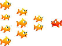 Goldfish in order. Looking at their leader Stock Images
