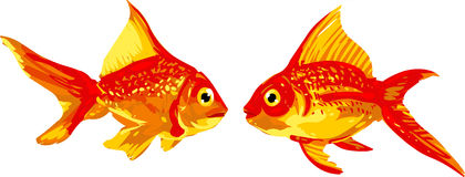 Goldfish Pair Stock Photo