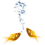 Goldfish pair Stock Images