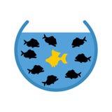 Goldfish and Piranha in Aquarium. Evil Ocean predators surrounde Stock Photos