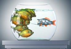 goldfish piranhas ιπποτών Στοκ Εικόνα