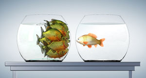 Goldfish and piranhas Royalty Free Stock Photography