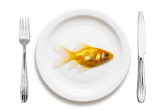 Goldfish on a plate Royalty Free Stock Images
