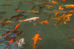 The goldfish pond Royalty Free Stock Photography