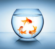 Goldfish in recycle concept. Symbol Stock Photography