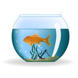 Goldfish in round aquarium Stock Images