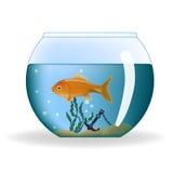 Goldfish in round aquarium Stock Images
