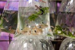 Goldfish rynek w Hong Kong Zdjęcie Stock