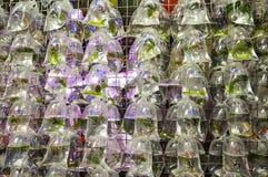 Goldfish rynek w Hong Kong Fotografia Royalty Free