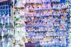 Goldfish rynek w Hong Kong Zdjęcia Royalty Free