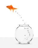 Goldfish s'échappant du fishbowl images libres de droits