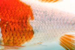 GoldFish Scales Royalty Free Stock Images