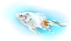 Goldfish in the sea. Stock Image
