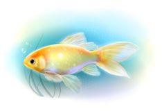 Goldfish in the sea.  Aquarium fish. Royalty Free Stock Photography