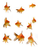 Goldfish set Stock Photography