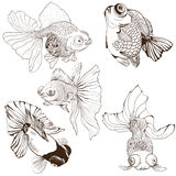 Goldfish - set of vector drawings. Use printed materials, signs, posters, postcards, packaging. Royalty Free Stock Images