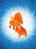 Goldfish on shine blue Royalty Free Stock Photo