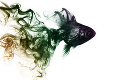 The Goldfish from the smoke Stock Photography