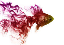 The Goldfish from the smoke Royalty Free Stock Photos
