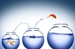 Goldfish springen lizenzfreies stockbild