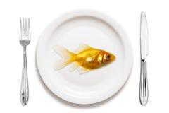 Goldfish su una zolla immagini stock libere da diritti