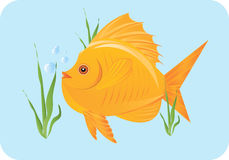 Goldfish  swimming Royalty Free Stock Photography