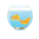 Goldfish swimming in aquarium Stock Photography