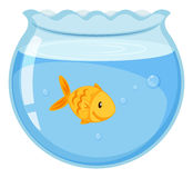 Goldfish swimming in the glass bowl Stock Photos