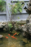 Goldfish are swimming in a pond in a buddhist temple in Hanoi (Vietnam) Royalty Free Stock Photo