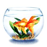 Goldfish swimming in the water in transparent round glass bowl, fish in aquarium, comfort zone concept, hand drawn. Watercolor illustration on white background royalty free illustration
