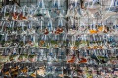 Goldfish targowy Mong Kok Kowloon Hong Kong Zdjęcia Royalty Free