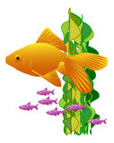 Goldfish and tiny purple fish on white Royalty Free Stock Images