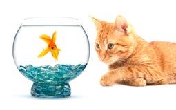 Goldfish und Katze Stockfotografie