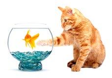 Goldfish und Katze Stockbild