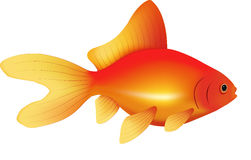 Goldfish | Vector Royalty Free Stock Photography