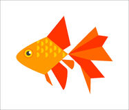 Goldfish or veiltail Stock Photography