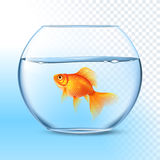 Goldfish In Water Bowl Realistic Image Royalty Free Stock Photo