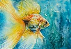 Goldfish Royalty Free Stock Photography