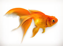 Goldfish wektoru ilustracja Fotografia Royalty Free