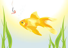 Goldfish and worm on a fish hook Stock Images